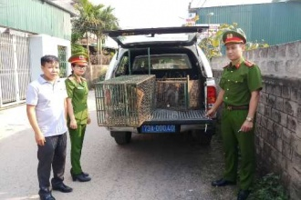 Tiếp nhận động vật hoang dã quý hiếm để cứu hộ